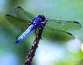 The dragonfly is a powerful spiritual symbol